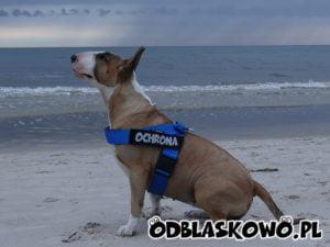 Naszywka dla psa ochrona