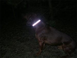 Opaska odblaskowa dla psa